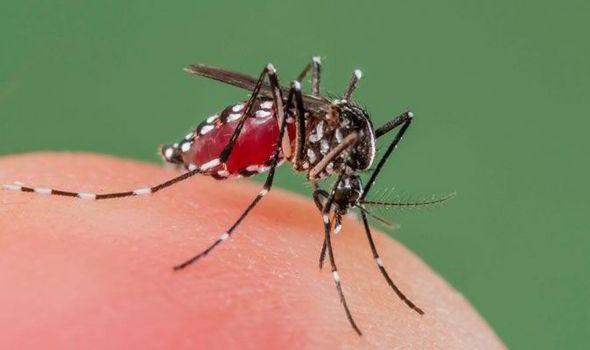 如果我們把全世界所有可惡蚊子都殺光的話,這就是會發生的悲慘事情。