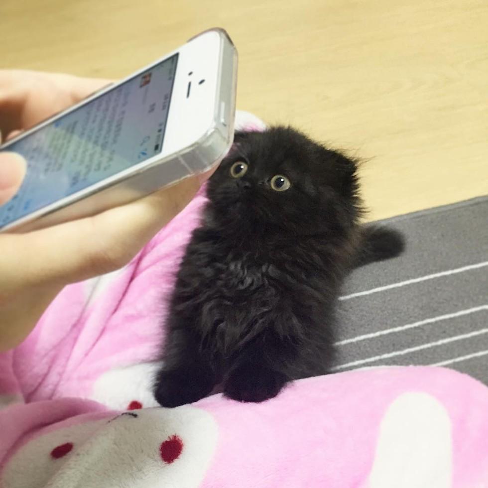 野生《龍貓》「小煤炭」捕獲!小黑喵「無辜眼看主人」:別再玩手機啦~