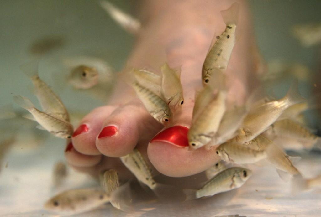 在亞洲大受歡迎的「醫生魚去角質腳底SPA」被爆出3大健康危害,聽完後我再也不敢讓小魚吃腳皮了...