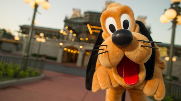 這隻導盲犬見到偶像布魯托真的太興奮了,當被主人命令趴下但最終忍不住興奮完全暴走的模樣太Q了!