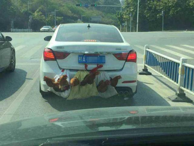 chickencar5