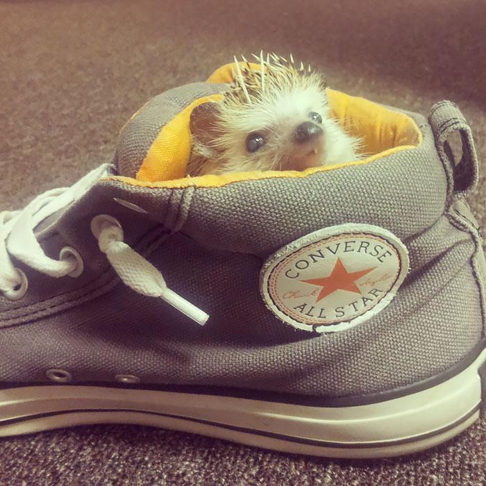 cute-hedgehogs-17__700