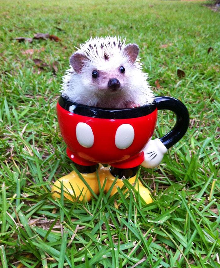 cute-hedgehogs-39__700