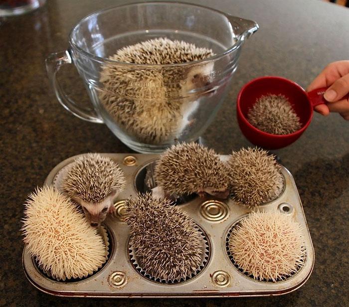 cute-hedgehogs-42__700