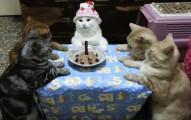 這名主人幫家裡的貓咪慶生,結果貓咪的「超正經反應」讓網友直呼:「絕對有拿槍威脅」!