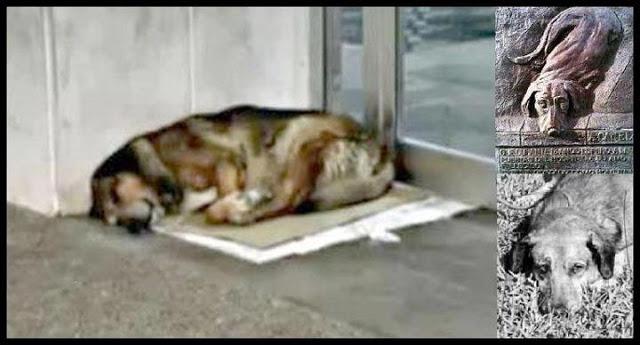 loyaldog