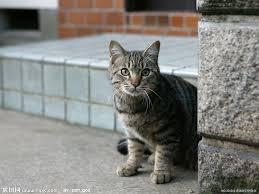 這名網友餵食流浪貓之後因為害怕流浪貓踩髒鄰居椅墊而留下道歉字條,結果鄰居給的超暖心回覆會讓你臉頰立刻濕透!