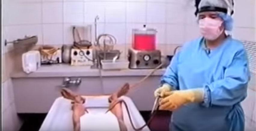 很多人都會覺得屍體保存過程真的很恐怖,但當她把「特別液體」輸入到屍體後...這真的太神奇了!