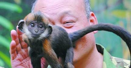 這名保育員舔了小猴子屁眼整整一小時才成功拯救他的小性命!