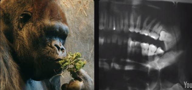 一秒分辯「你是不是進化的人類」 只要看大拇指和小拇指就知道!