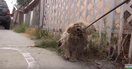 這隻狗狗只有遇過虐待他的人類因此只要一靠近他就狂咬,但當志工手終於摸到時...他的反應讓我心好痛!