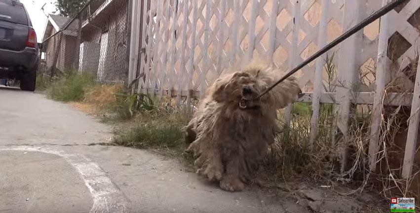 狗狗被虐待