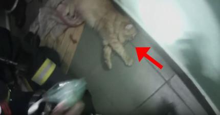 這隻貓咪受困火場而奄奄一息基本上已死掉,但趕到的消防人員就急中生智...!