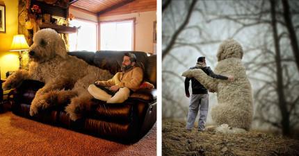 這名攝影師曾經藥物纏身,但他現在拍的「與巨大愛犬一同冒險」夢幻照片會讓愛狗人士都愛慘!
