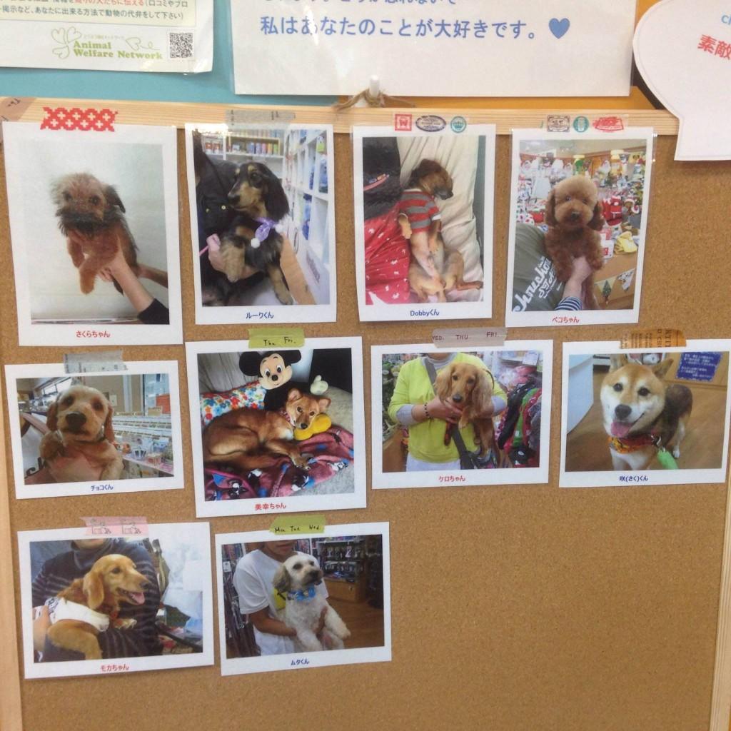 這家寵物店一律不賣寵物讓人不解,當一問老闆「為什麼不賣時」他的回答會讓所有買過寵物的人超羞愧!
