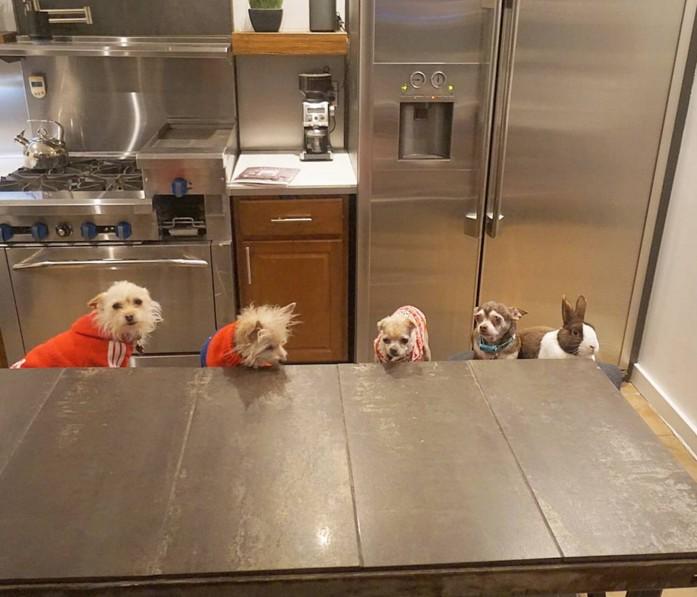 他因為不想要生命有遺憾就領養了7種不同動物把家裡變成「快樂動物園」!他們每天早上10點的儀式真的太可愛了!