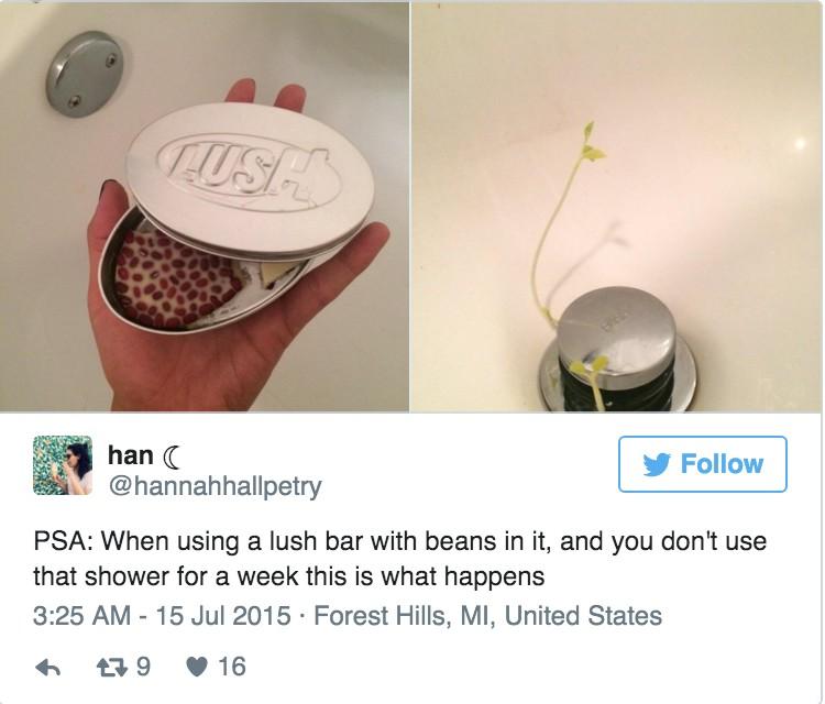 他用了這塊LUSH出的按摩餅一個禮拜,然後浴室就冒出比「傑克與豌豆」還神奇的植物了。
