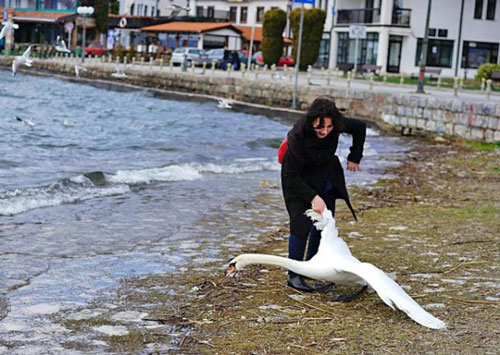 她在岸邊發現了美麗的天鵝就決定要拉他來自拍,但天鵝最後的「超悲慘結局」會讓你對人類徹底失去希望!