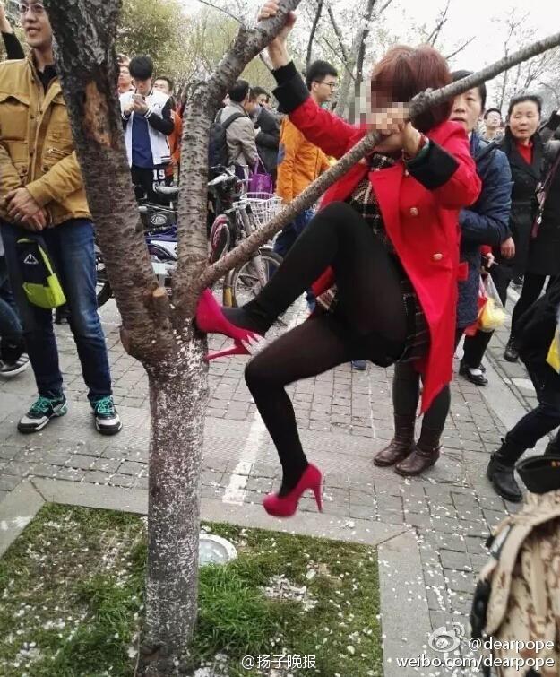 連中國人也看不下去的「大陸人賞櫻行為」,看到第三個大媽比照片中這男子還過分的模樣快讓人氣死了!