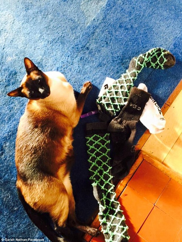 貓主人一直覺得很奇怪貓咪怎麼每次都鬼祟得從床底出來,結果2個月後一看...OMG超變態!