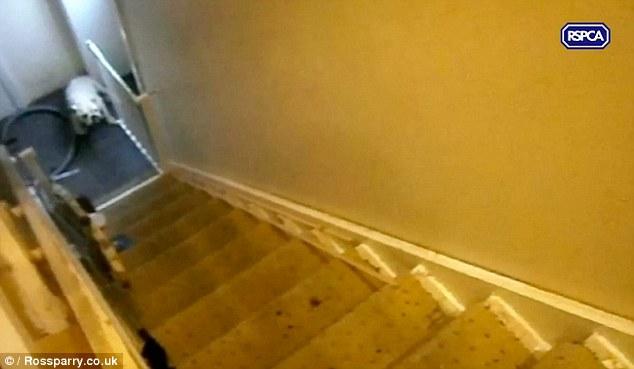 英國虐狗兄弟把狗狗從樓梯上重摔拳打腳踢,但看到他們被判的「超輕刑」已經讓網友都暴動到要把議會拆了!