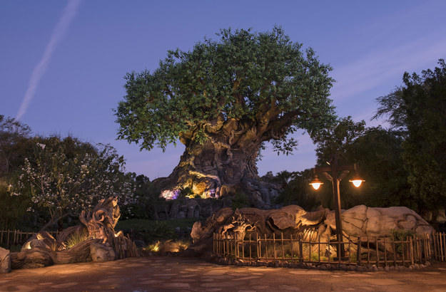 Animal Kingdom's new hours and attractions will debut on Earth Day this year, April 22.