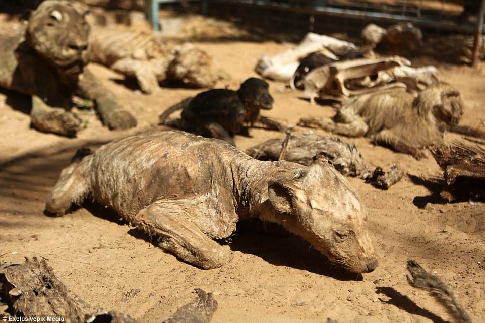 全世界最悲慘的動物園,園內動物都已經失去了靈魂...