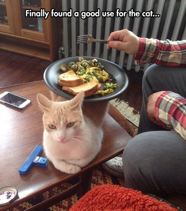 cool-cat-table-plate-food