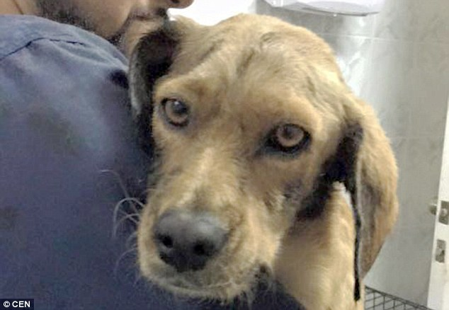 The family who rescued the dog will now take her in and have named her Quitran - the Spanish name for tarmac