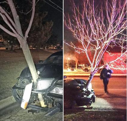 警察開到一半驚見一棵樹居然在快速移動,結果當終於攔下來發現真相後網友都噴笑了!