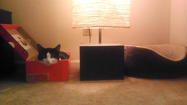 15張為什麼不應該買東西給家裡貓咪的「被貓邏輯搞到超抓狂」照片!