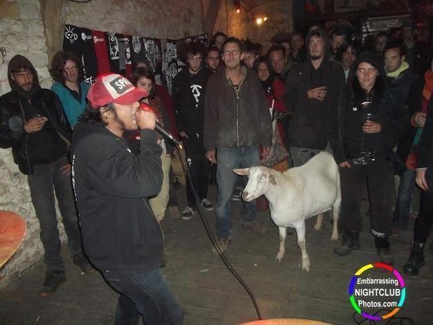 If nightclubs always had goats, I'd always go to them.