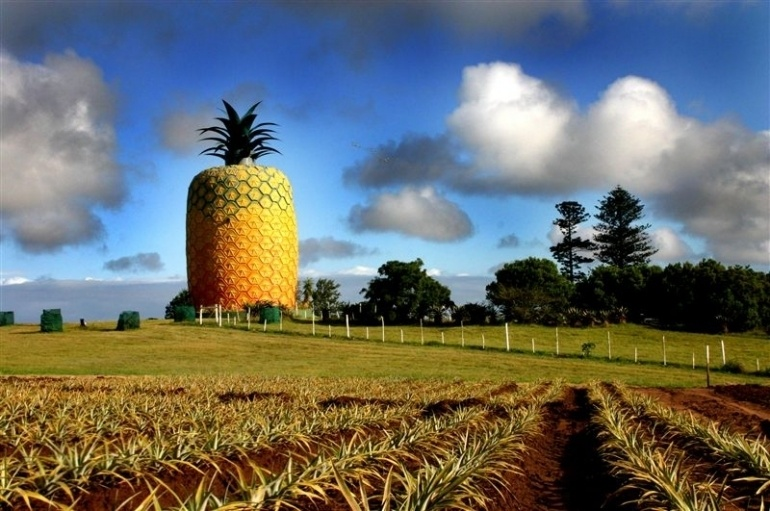 The Big Pineapple in Bathurst, Eastern Cape is the biggest artificial pineapple in the world. It serves as a museum for the pineapple production industry in the region -- and has amazing views.