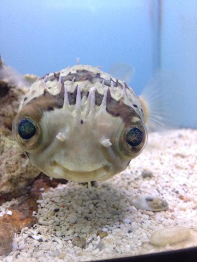 30隻連海底總動員都想找他們重拍電影的「爆炸萌海底生物」。原來海底生物才是最可愛的!