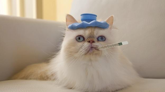 sickcat