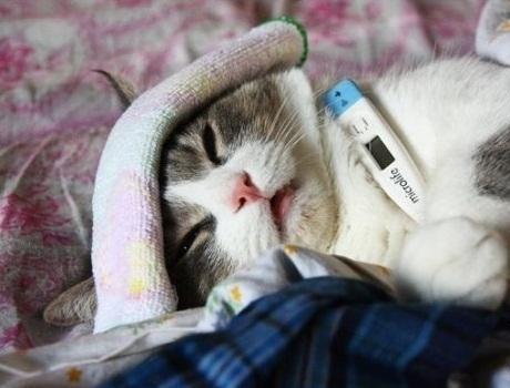 10-sick-cat