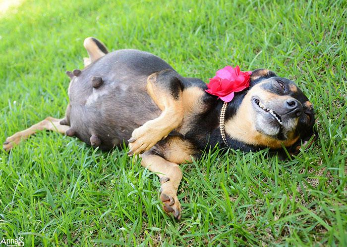 dog-maternity-photo-shoot-lilica-ana-paula-grillo-17