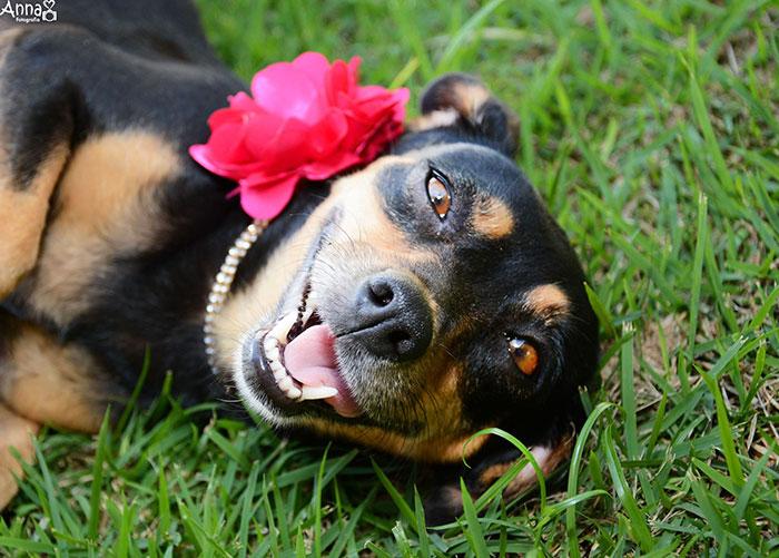 dog-maternity-photo-shoot-lilica-ana-paula-grillo-15