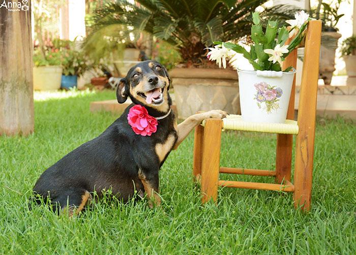 dog-maternity-photo-shoot-lilica-ana-paula-grillo-19