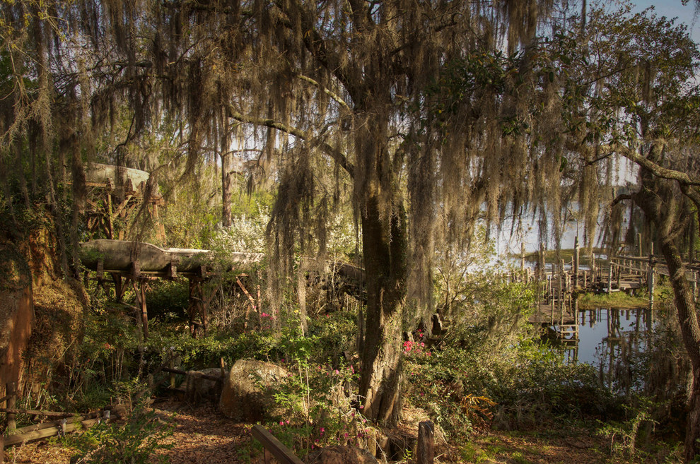 The images evoke an eerie, swampy, almost prehistoric vibe.