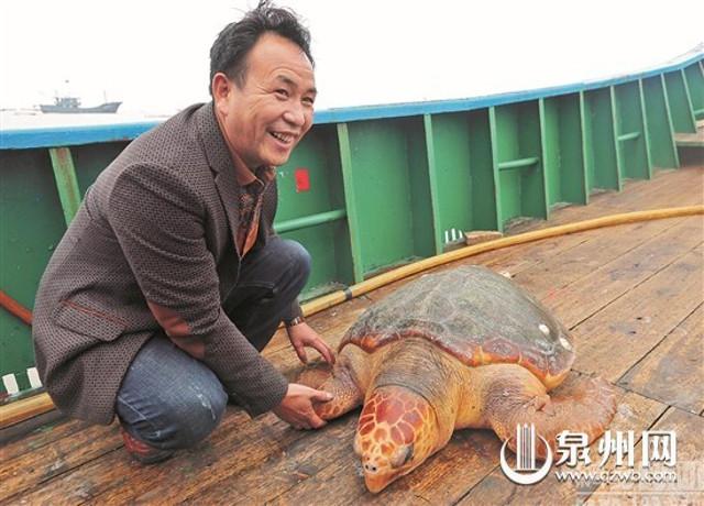 release_turtle2.jpg