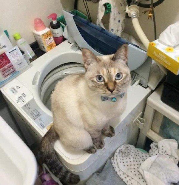 stray cat 7