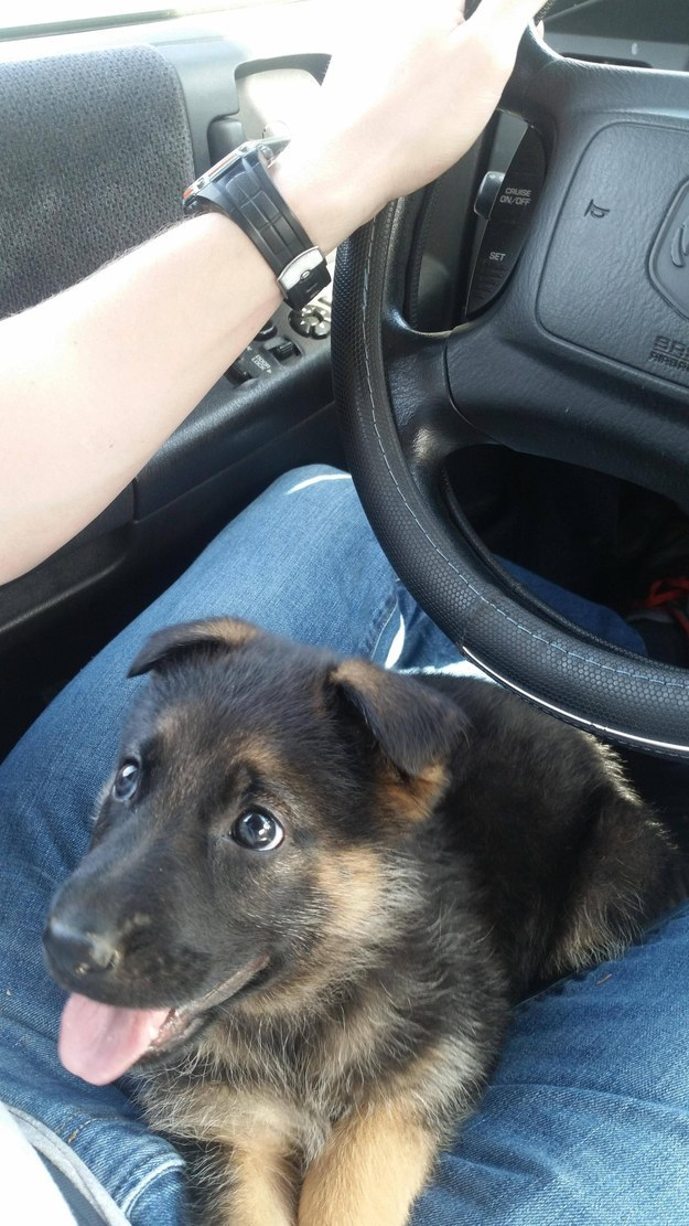 This co-pilot still small enough to fit under the steering wheel.