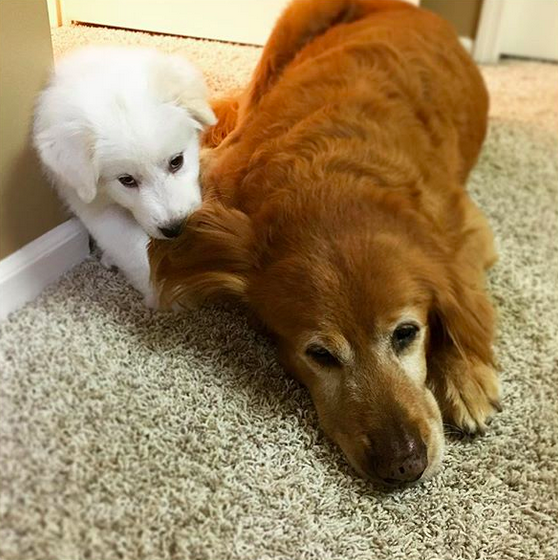 This little snowball who JUST WANTS TO PLAY WITH THE BIG BOYS.