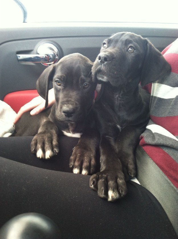 This pair of troublemakers with their giant puppy paws.