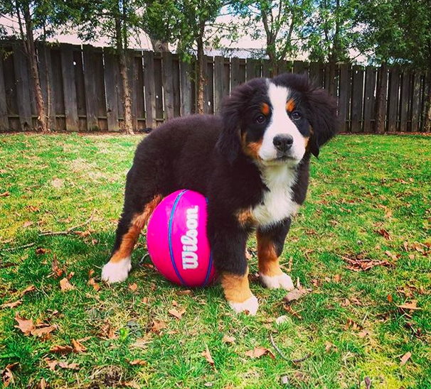 This basketball-sized buddy, about to be WAY more than basketball-sized.