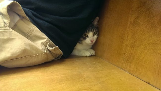 He hasn't figured out that it's his human's fault he's at the vet.