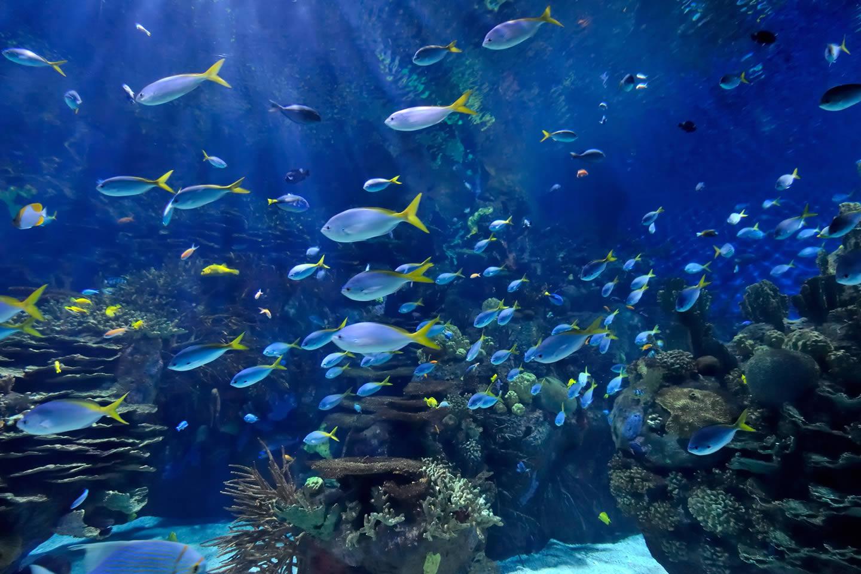 這間水族館的圓鰭魚幾乎每晚都神秘消失,直到有天早晨看到「比人類聰明」犯罪者在魚缸裡不小心睡著了!