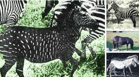 30個去侏羅紀世界都看不到的「奇特動物款式」。