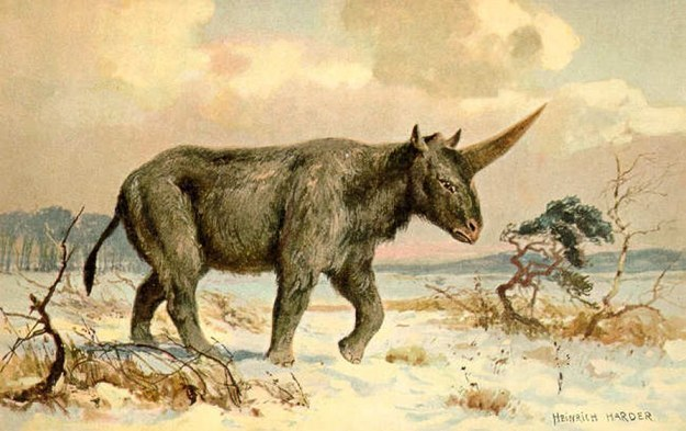 考古學家挖到這個頭骨化石才發現「獨角獸真的存在」,但身形可能跟你想像的很不一樣...